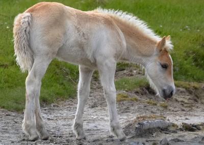 Paarden Middelplaten 13