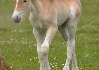 Paarden Middelplaten 11