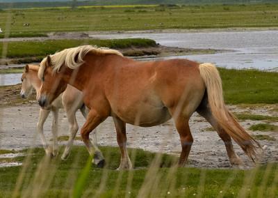 Paarden Middelplaten 9