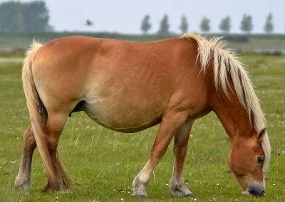 Paarden Middelplaten 21