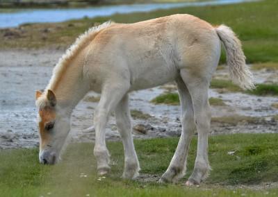 Paarden Middelplaten 20