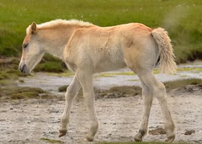 Paarden Middelplaten 17