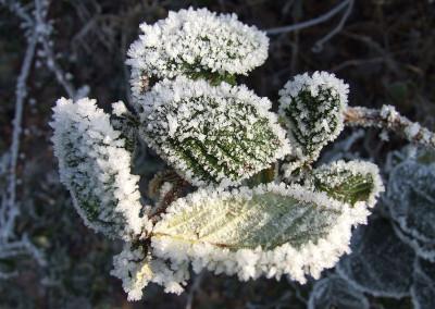 Winter 28