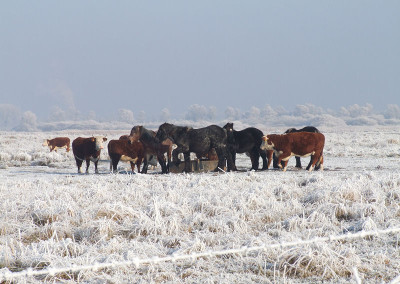 Paarden winter 3